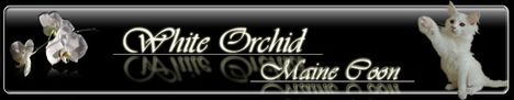Baner white orchid
